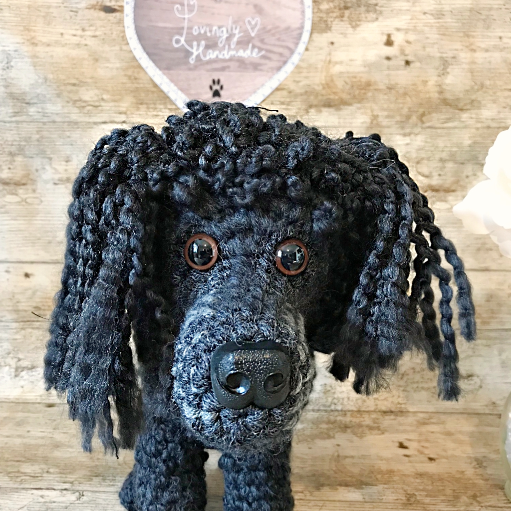 Oscar the Miniature Poodle