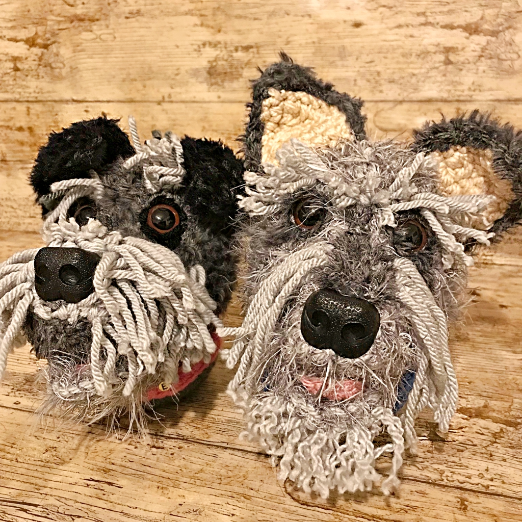 the Miniature Schnauzer's