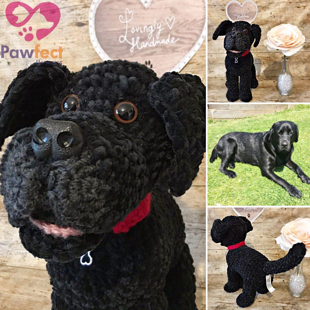 Monty the Black Labrador