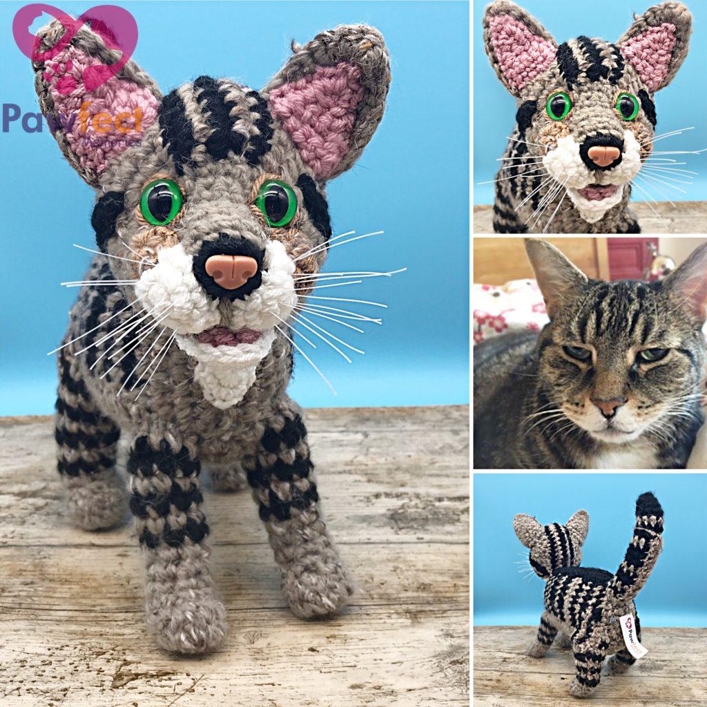 Pumpkin the Tabby Cat