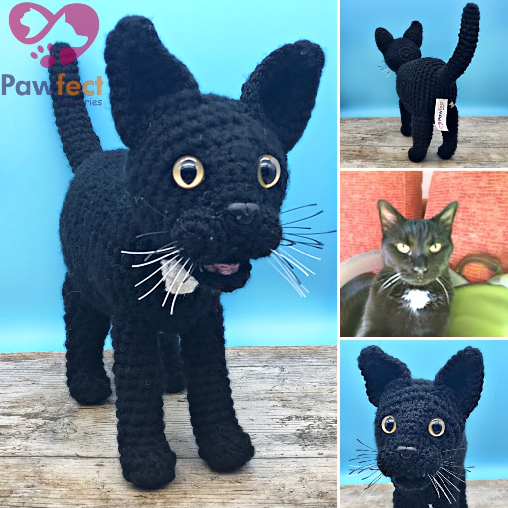 Squash the Black Cat