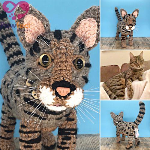 Baxter the Bengal Cat