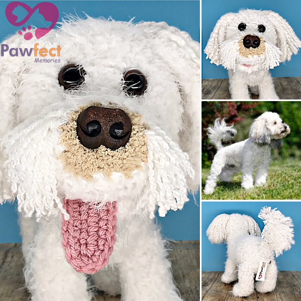 Dolly the Bichon Poodle