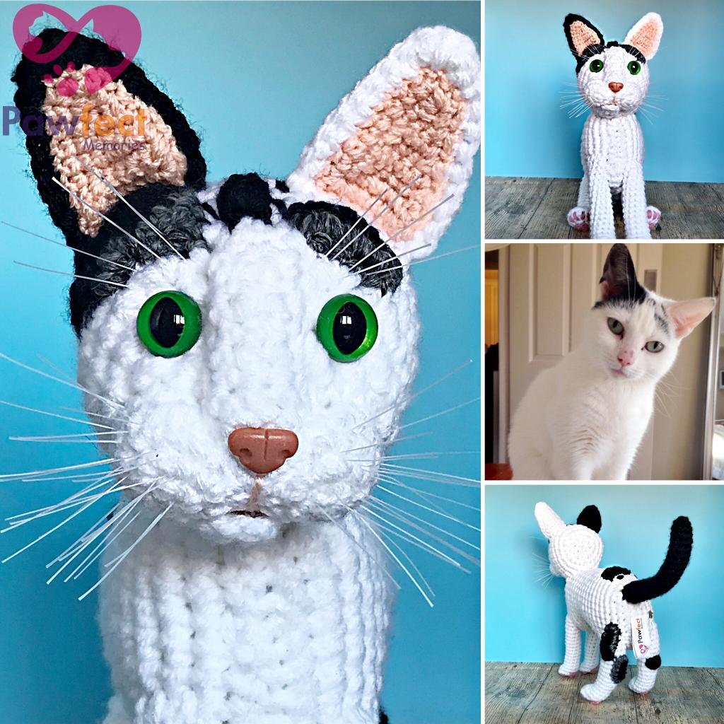 Josephine the Domestic Short Hair Cat