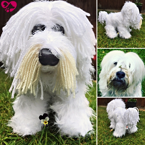 Bert the Tibetan Terrier