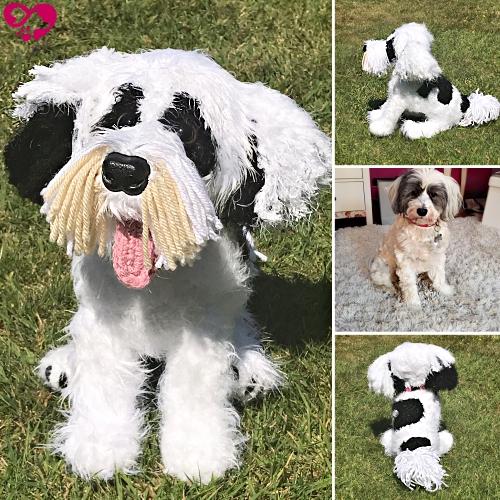 Nudge the Tibetan Terrier