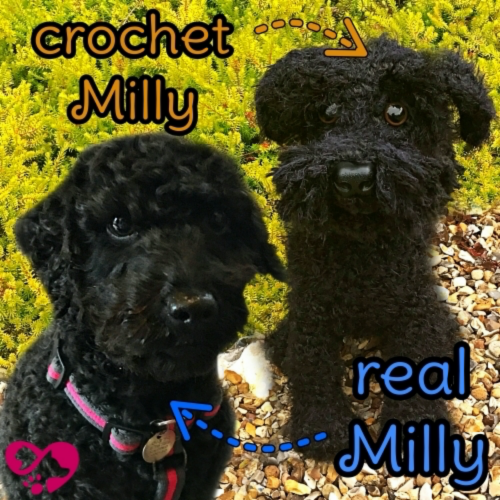 Milly the Toy Poodle - Standard Pet Cuddly Toy